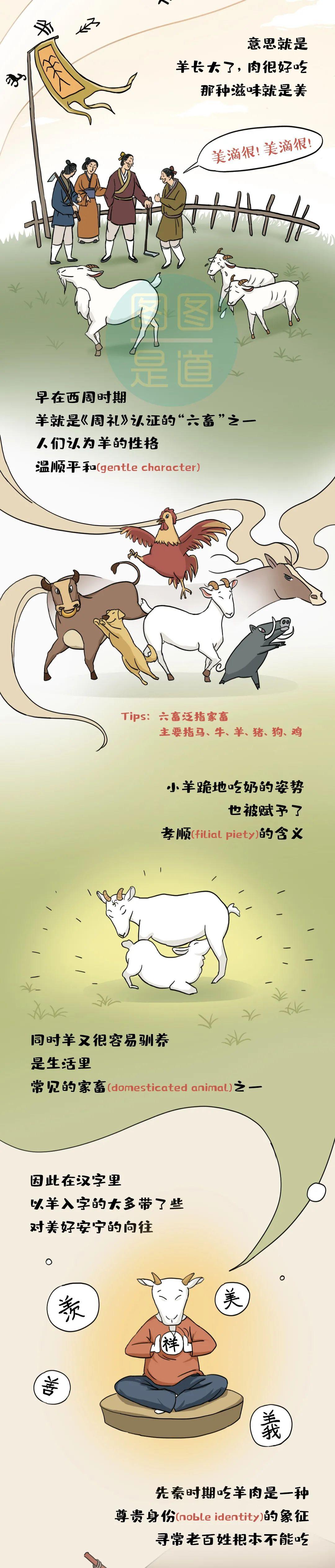 咩咩咩~羊肉为什么有膻味?| 图图是道